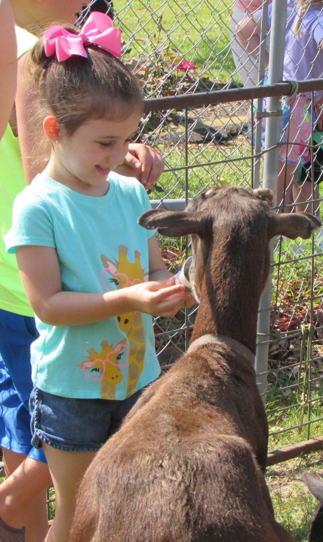 GL_girl goat